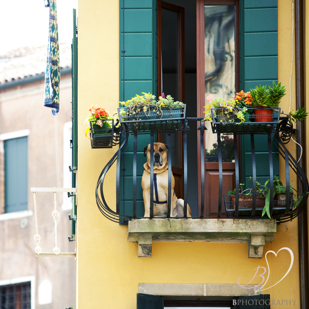 Dog on a balcony in Venice
